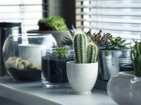 kaktus-nasil-dikilir-ve-kaktus-bakimi.jpg